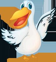 White Pelican Service